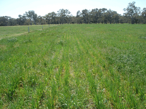 Pasture-Cropping