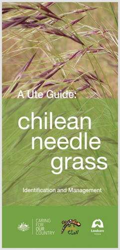 Ute Guide to Chilean needle grass